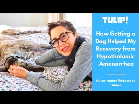 Recovery From Amenorrhea And Adopting A Greyhound