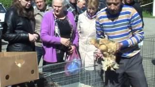 Выставка-продажа домашней птицы