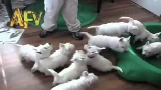 Куча смешных щенков