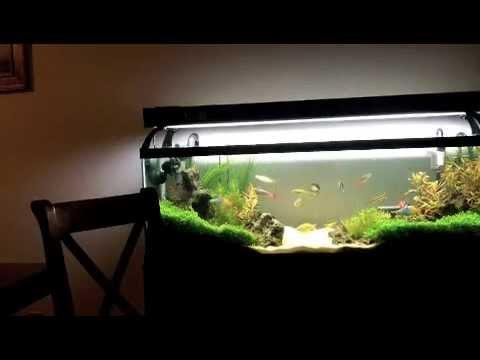 Planted fish tank aquarium 40 gallon long aquarium youtube for How long is fish good for