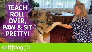 Fun and Easy Dog Tricks to Teach Your Dog  Roll Over, Paw & Sit Pretty!