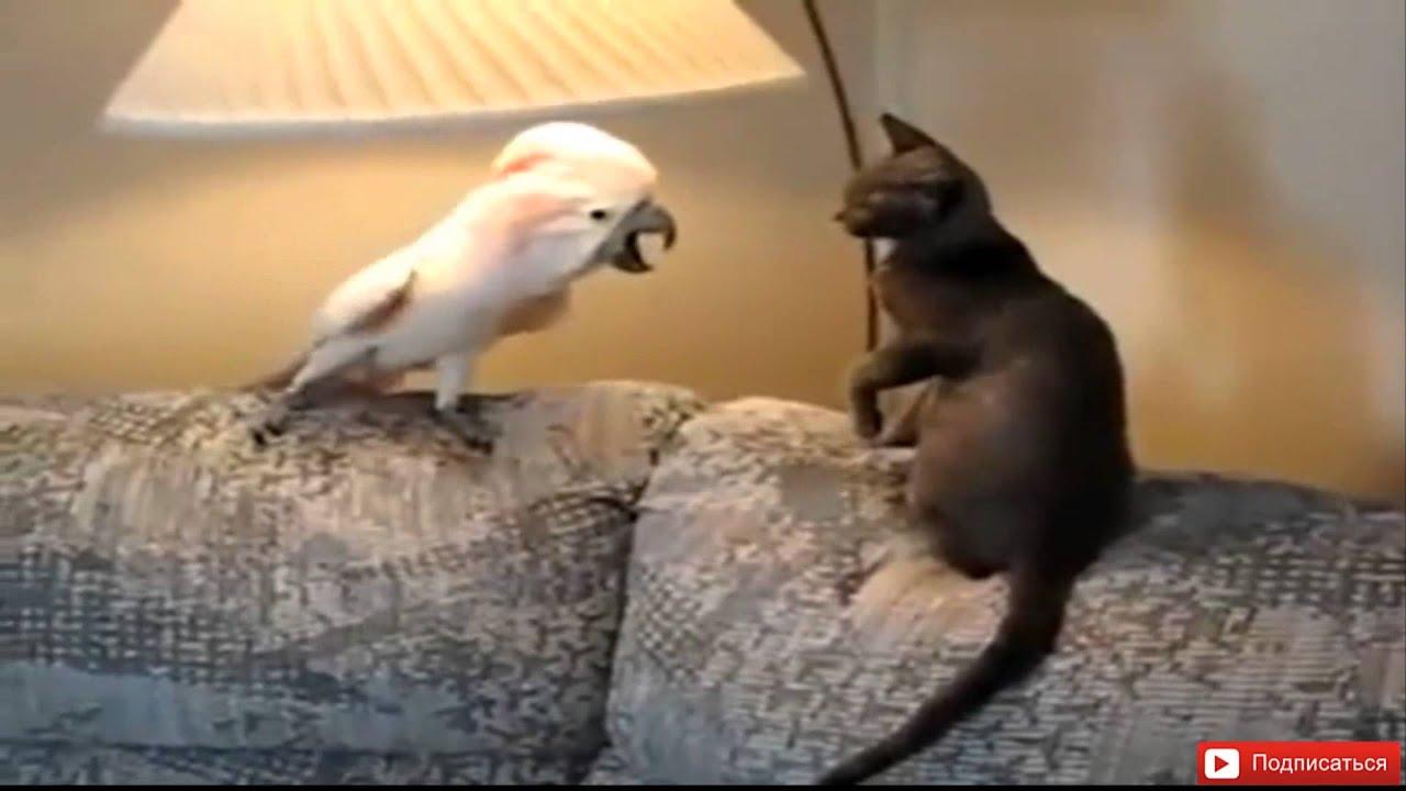 Анимации марта, смешные картинки видео про животных до слез смотреть онлайн