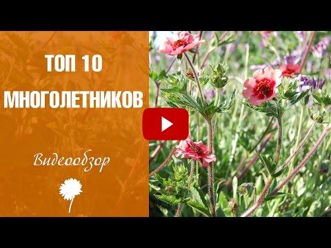 Цветы в саду 🌼 Топ 10 многолетников цветущих все лето - видеообзор HitsadTV