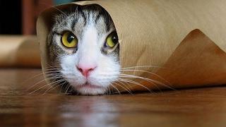 可愛貓咪影片-貓咪真的是好奇妙的動物阿~