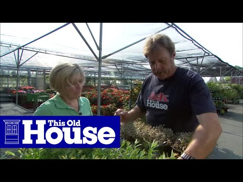 How to Choose and Plant Ground Cover This Old House YouTube