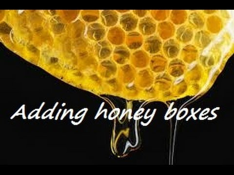 How I raise honey bees in my backyard…part 3 adding honey boxes