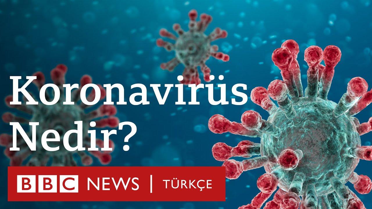 Korona virüsü (corona virus) nedir, nasıl korunulur?