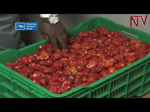 Exporters of organic produce face tough time as competition stiffens