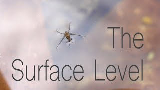 The Surface Level - Surface Tension and the Animals That Use it