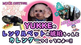 『MUCK ON!TV』#031「YUKKEのレンタルペットの琥珀ちゃんとカレンダーつくってみよー!!」(試食版)