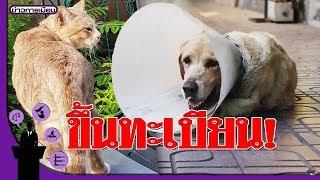 ครม.เห็นชอบขึ้นทะเบียน 'หมา-แมว' ใครเลี้ยงต้องเสียเงินให้รัฐ ฝ่าฝืนปรับหลายหมื่น!