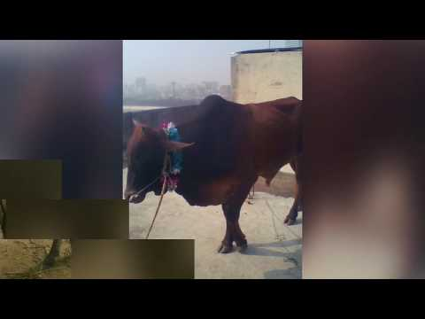 Our qurbani video song 2017 ft singer Biplob