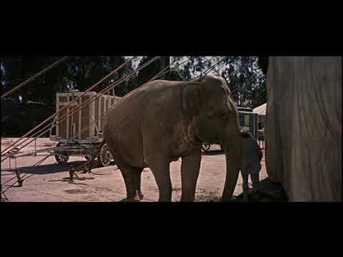 Download What Elephant?? - Jumbo 1962