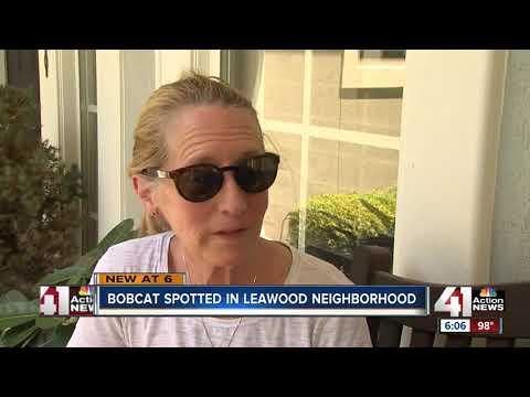 Bobcat spotted in Leawood backyard