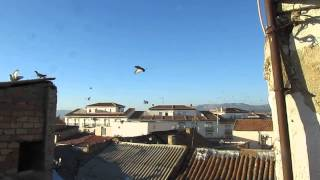 Cómo ahuyentar palomas y reducir su población