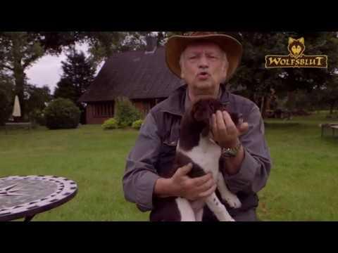 So gewöhn ich meinem jungen Hund das Beißen ab - Dr. Wolf erklärt