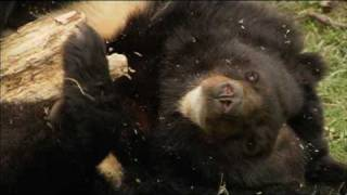 Moon Bears Journey to Freedom Part 1