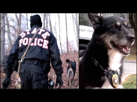 "Cop Rescues ""Unadoptable"" Shelter Dog But 4 Years Later Blood Runs Cold When He Makes Discovery"