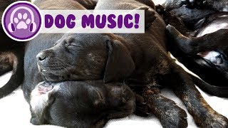 Calming Music for Your Dog! Relax Your Dog with Music!