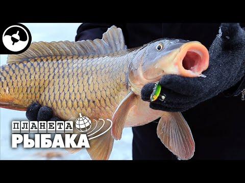 Сазан зимой на балансир. Рыбалка в Астрахани   Планета рыбака ©