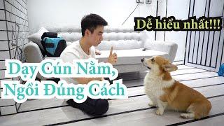 Huấn luyện chó cơ bản | Dạy cún Nằm, Ngồi tнeo lệnh