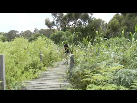 Tower Hill Wildlife Reserve, Victoria Australia