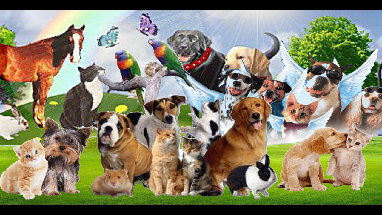 Will Your Pets And Animals Be In Heaven Youtube