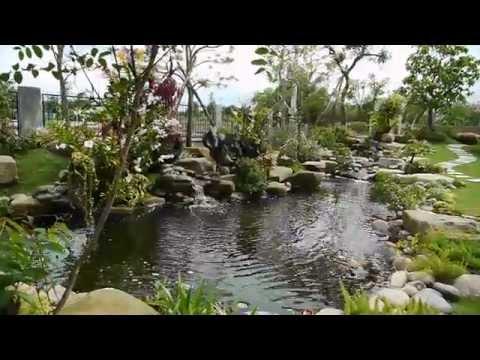 Thiết kế sân vườn biệt thự, hồ cá cảnh, cây xanh.