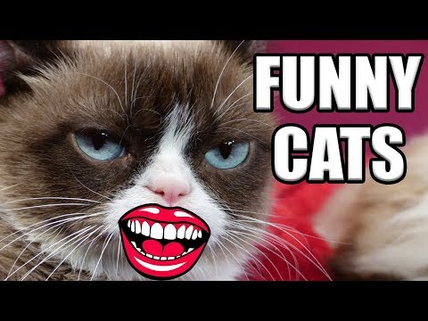 🐱YOU LAUGH, YOU LOSE 🐱 NEW! Funniest Kitten Cat Vine Compilation 2017 Part 2 Laugh Smile Challenge