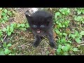 Baby kitten meow very loud on the street の動画、YouTube動画。