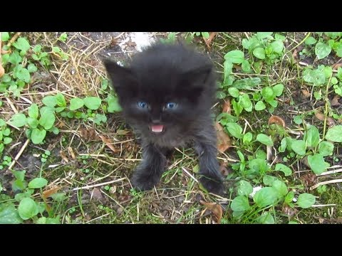 Baby kitten meow very loud on the street