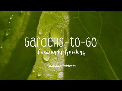 Garden-To-Go Community Gardens in downtown Napanee