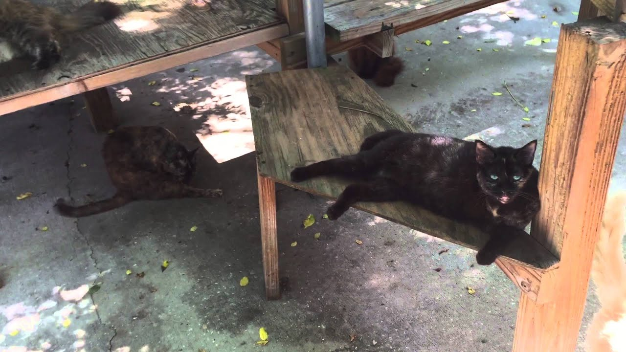 Journeys End Animal Sanctuary Cat Patio