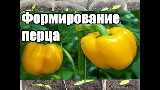 Как формировать перец /Формирование перца в открытом грунте