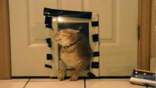 hilarious cat prank TWO; plastic wrap wall