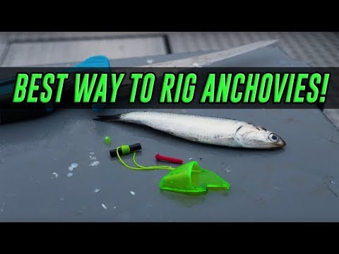 HOW TO Rig & Fish With Anchovy Helmets For SALMON. (PROVEN METHOD!)