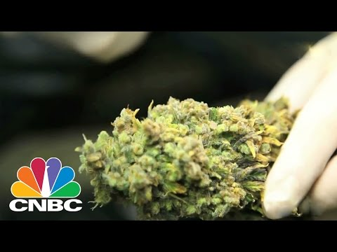 How To Get Rich Off Weed | CNBC