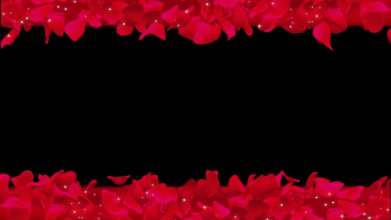 Футаж Лепестки роз горизонтально
