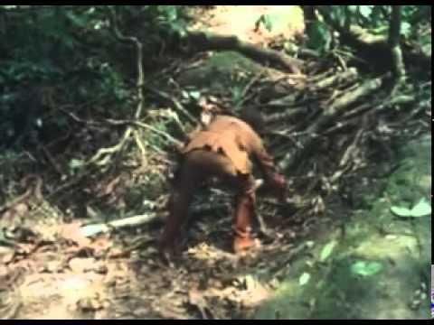 Der Tiger von Malaysia 6a Parte 1976