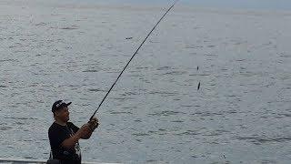 Как поймать ставриду с берега на черном море.Монтаж и проводка для ставриды.Ловим ставриду в Абхазии