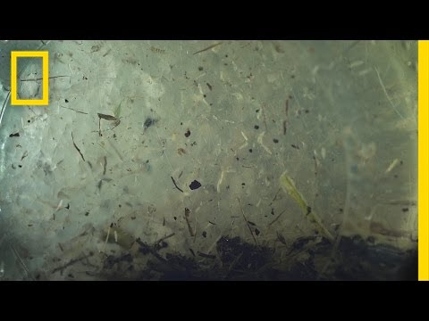 Are Microplastics in Our Water Becoming a Macroproblem? | National Geographic
