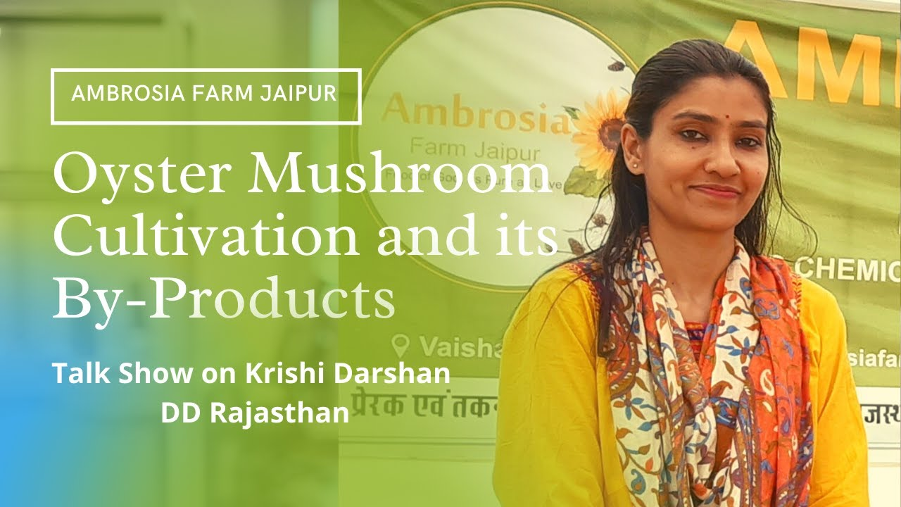 How to Start Oyster Mushroom Cultivation & Its By-Products Business Krishi Darshan DD Rajasthan