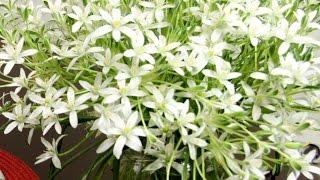 Что делать, чтобы цветы дольше стояли в вазе(, 2016-05-08T19:54:23.000Z)