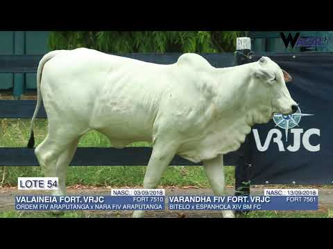 LOTE 54   FORT 7510,7561