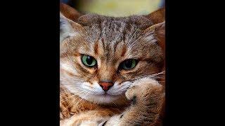 Что чувствуют коты и кошки, когда их обижают?