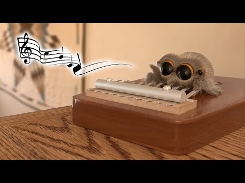 The world's most musical spider