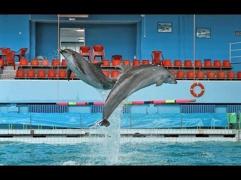санкт-петербургский дельфинарий на 8 марта