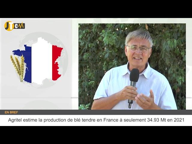 Une récolte de blé très décevante en France