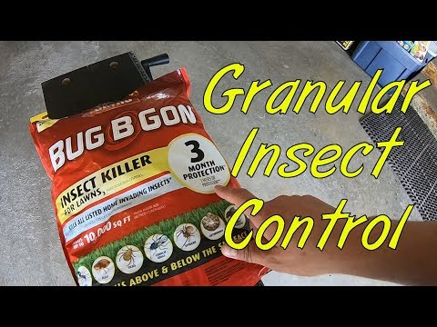 granular-insect-control-in-the-lawn
