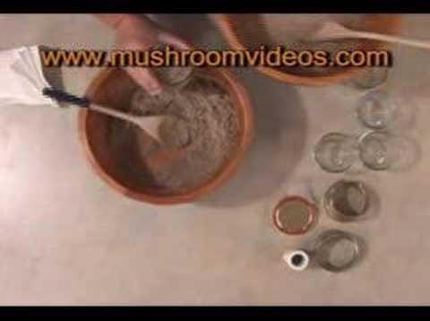 How To Grow Magic Mushrooms The Magic Mushroom Growers Guide (page 1)